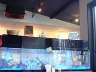 熱帯魚いっぱい♪