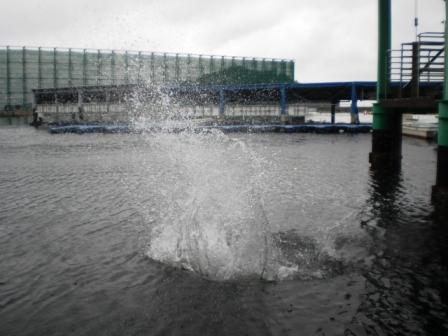 水面下にはスナメリがいて汐吹いてます(嘘)